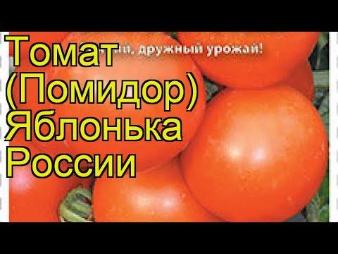 Томат Яблонька России. Краткий обзор, описание характеристик, где купить семена solánum lycopérsicum