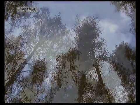 Sibelius : Tapiola (Full) - Neeme Järvi (DGG)*