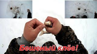 Бешеный клёв окуня Рыбалка Косынка против Удочки Тест зимнего паука