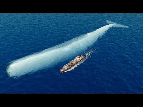 La historia real de Moby Dick es más increíble de lo que jamás contaron  Mocha Dick