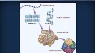 Repeat youtube video AMMINOACIDI E PROTEINE da Agorà Scienze Biomediche