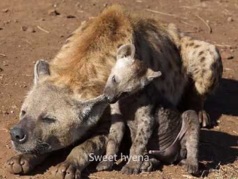 Cheap Budget Kruger Park safaris South Africa packages and deals