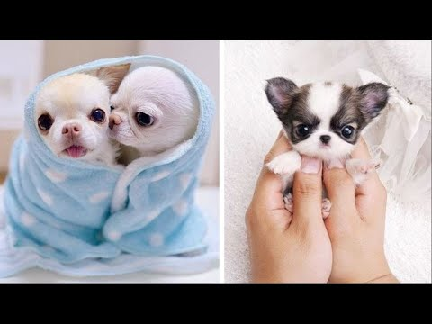 AWW CUTE BABY ANIMALS Videos Compilation cutest moment of the animals - Soo Cute! #29