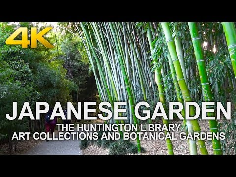 4K Walking Tour | Japanese Garden - The Huntington Library Art Collections And Botanical Gardens