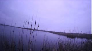 Охота на гуся 2016 (смотреть до конца)