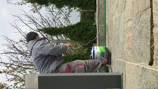 Cómo prepararse para el invierno thuja occidentalis smaragd árbol