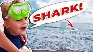 real-shark-on-the-beach-would-you-swim