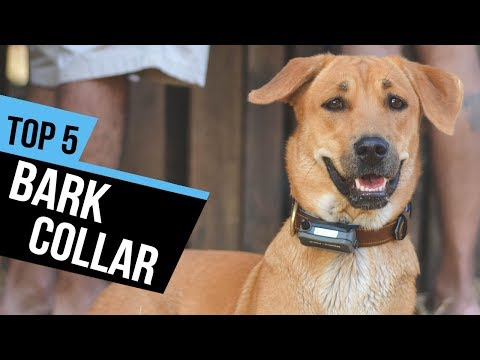 5-best-bark-collar-reviews