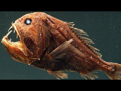 5 Самых Жутких Глубоководных Рыб в Мире 2 часть