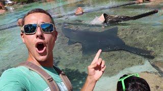 Saving ENDANGERED SAWFISH Breeding Ground In Atlantis!