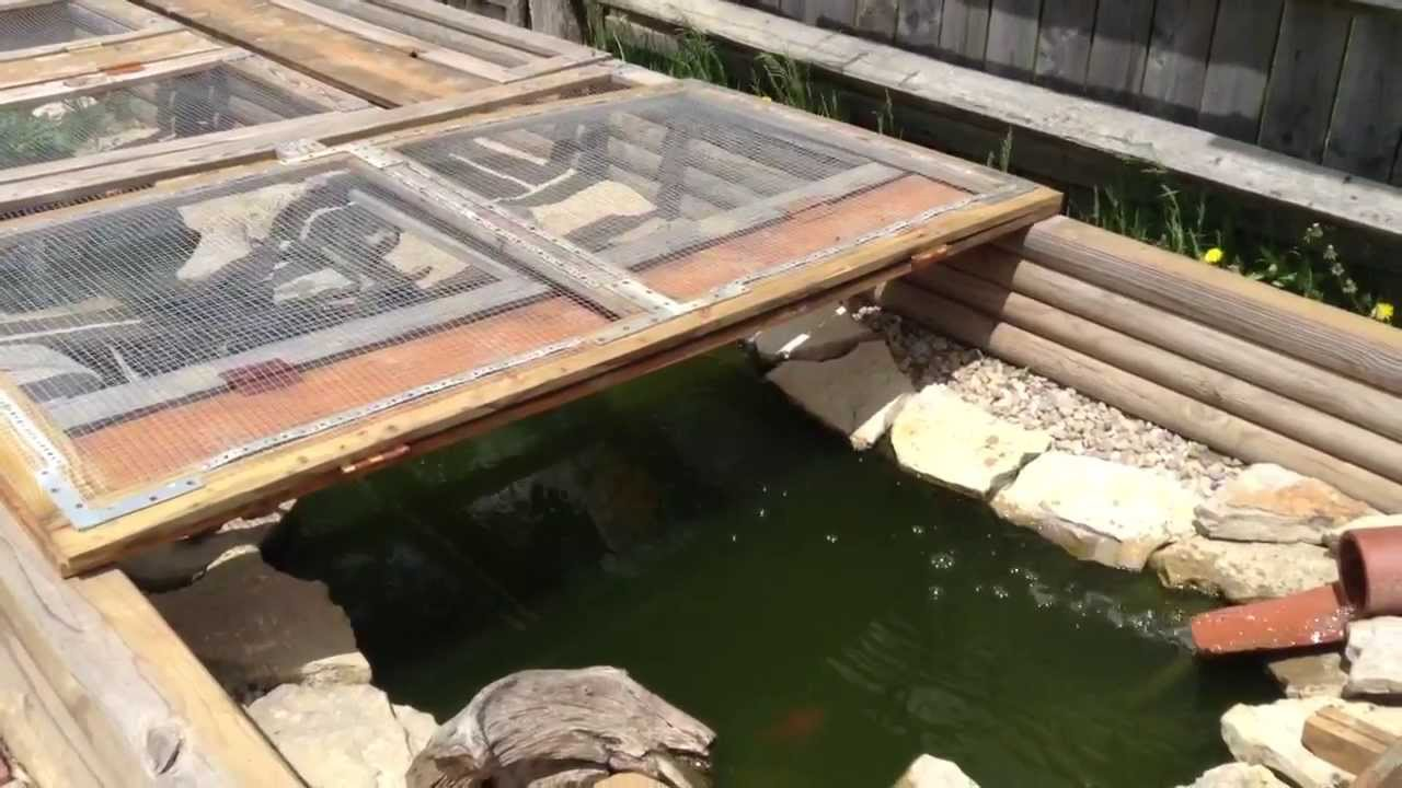 caring for turtles in outdoor pond   youtube