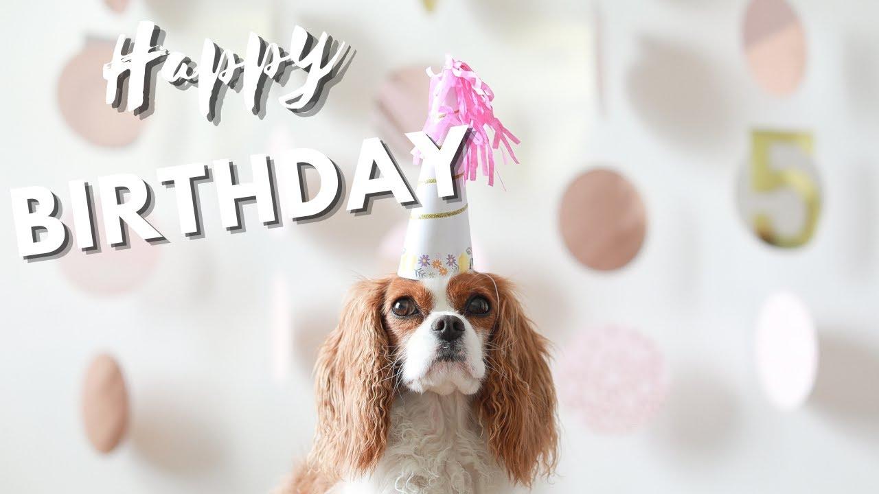 MILTON TURNS 5! // Dog Birthday Meal
