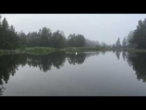 Kulning - How to call a wild swan with traditional Swedish singing.