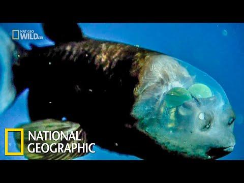 Самые странные в мире: Необычные части тела | (National Geographic)