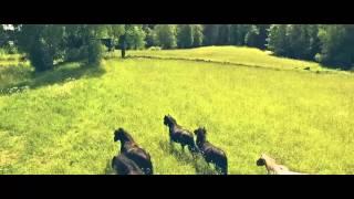 DJI Phantom 3 Advanced - Horse fields at Jäboruder