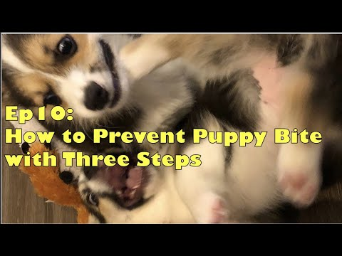 how-to-stop-puppy-biting-with-3-steps-[ep10]