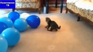 Коты лопают шары = cats crash balloons, коты и воздушные шары, смешная подборка с котами