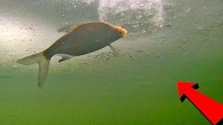ПодЛЕЩ зимой. Безмотылка в действии + подводная съемка!