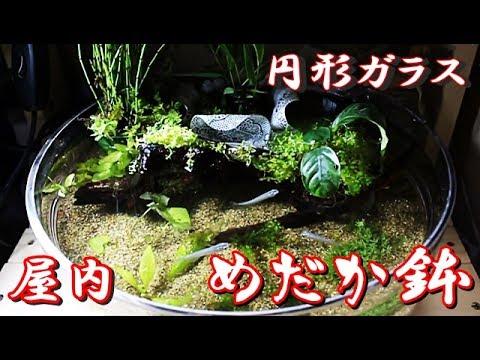 円形ガラス・めだか鉢/屋內でメダカ飼育 - YouTube