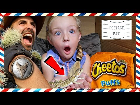 I Mailed Myself to the Desert With Pet Lizard *OMG* Met Coyote Peterson From Brave Wilderness (Skit) thumbnail