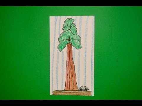 Let S Draw A Ca State Redwood Tree Youtube The green fabric and brown sisal rope give your cat a feeling of being outdoors amongst the trees while actually being safe inside your home. let s draw a ca state redwood tree