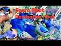 Suara Pikat Jitu Burung Rambatan Ribut  Terbaru  Mp3 - Mp4 Download