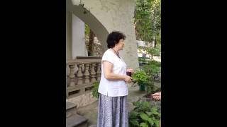 дом Чехова Ялта июль 2015