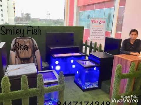 Dr Fish & Fish Pedicure Setup Wholesale Dealer Delivery All India Bes Price 8447174348