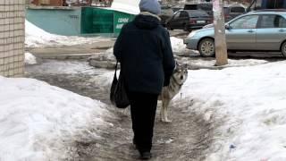 Чем занимается собака пока нет хозяина.MOV(, 2012-04-08T16:00:52.000Z)
