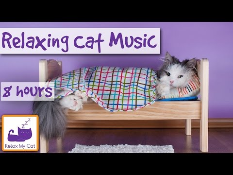 8 Hours, Relaxing Cat Music, Calming Music for Cats, Help with Cat Behaviour and Cat Anxiety issues