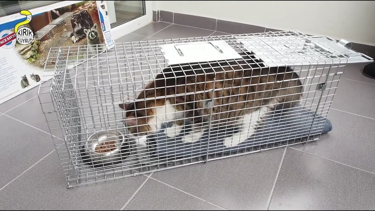 TNR Setting up a Cat Trap Havahart New
