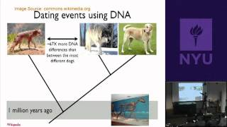 Natural Science II: Genomes and Diversity - Animal Genomics & Origin of Domestic Dogs