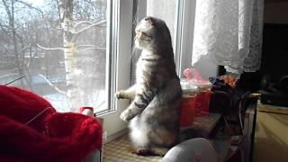 Кошка стоит на двух лапах