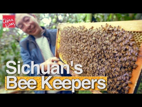 China's Beekeepers and the Bees | A China Icons Video