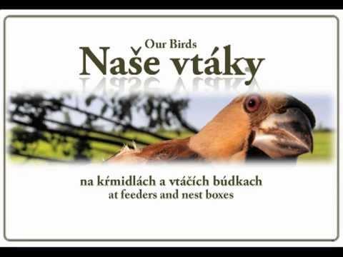 Naše vtáky na krmidlách a vtáčích búdkach