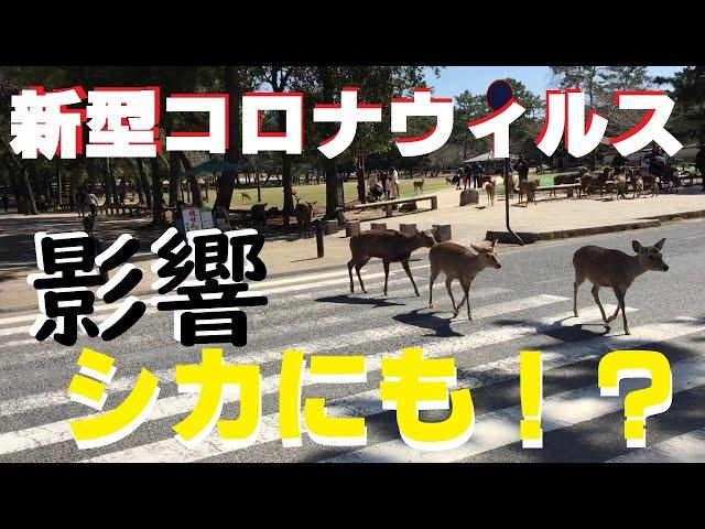 ①/③『奈良公園のシカにもコロナウィルスの影響が及んでいる』とニュースで見たので奈良公園に行ってみた。近鉄奈良駅~奈良公園間散歩編【#2 今話題の場所に行ってみた】