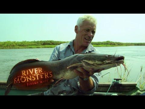 FEROCIOUS African Sharptooh Catfish   CATFISH   River Monsters