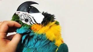 burung macaw termahal