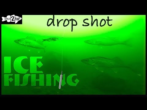 How To Ice Fish Walleye With The Drop Shot Rig