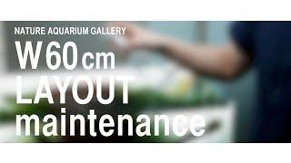 [ADAview] NATURE AQUARIUM GALLERY W60cm LAYOUT maintenance