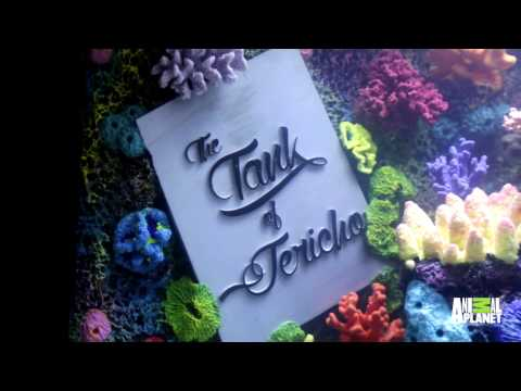 WWE Star Chris Jericho Loves His Custom Fish Tank | Tanked