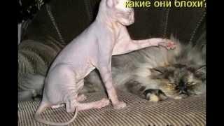 Прикольные картинки с котами
