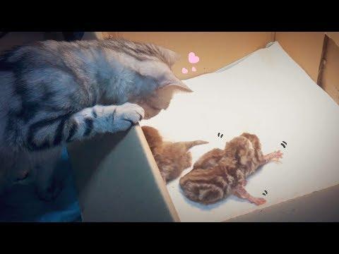 고양이 수리가 새끼를 낳았어요 Cat Gives Birth To 3 Kittens 猫の出産 [SURI&NOEL]