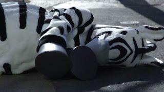 Tokyo's Ueno zoo stages fake zebra escape