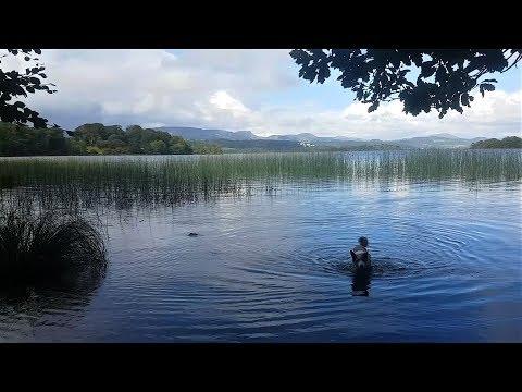 Bog Mushing in Ireland