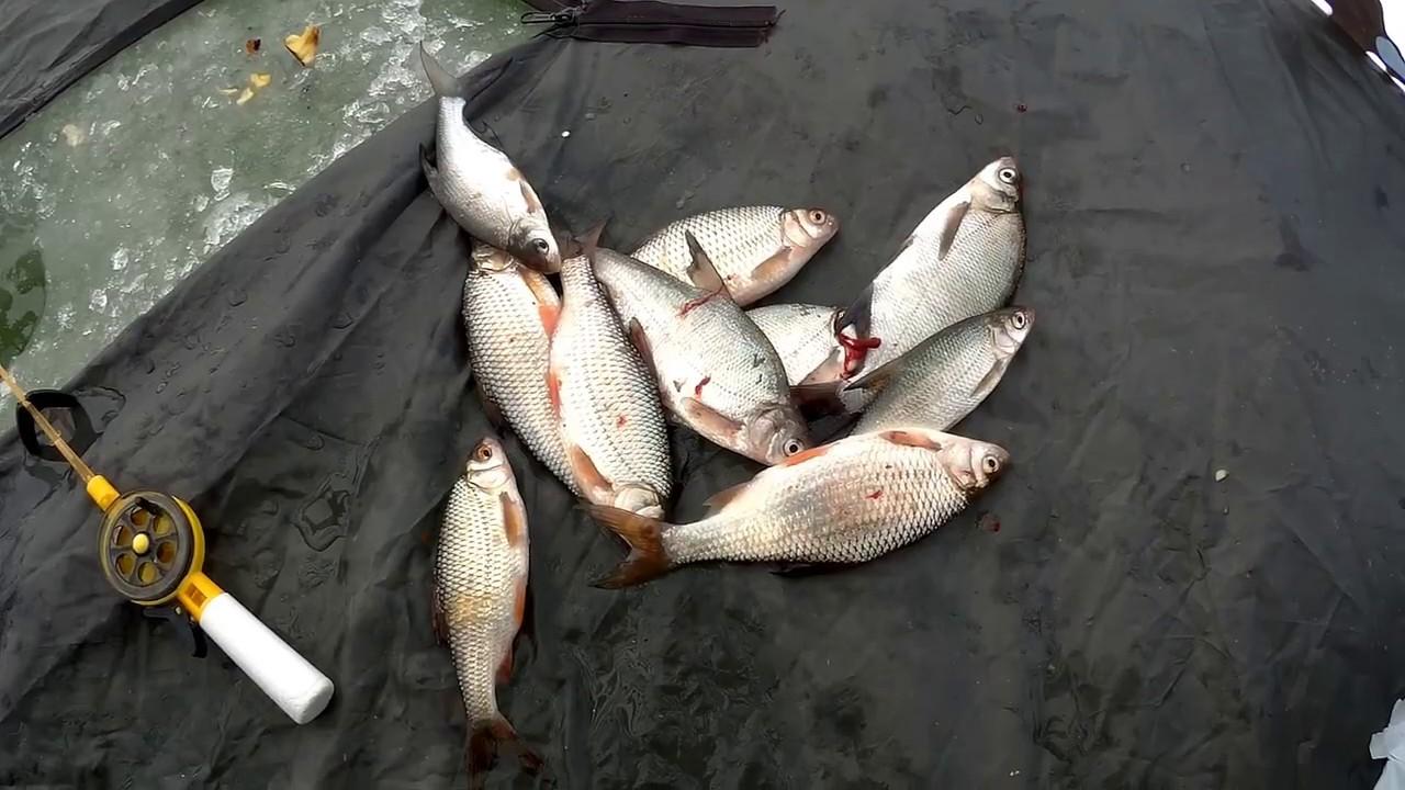 Рыбалка на реке цимле