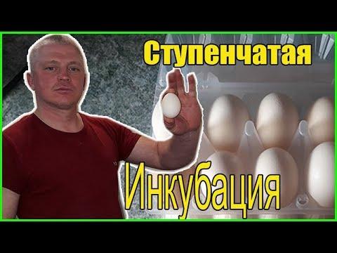 Инкубация индюшиных яиц /Ступенчатая инкубация/ Деревенская жизнь
