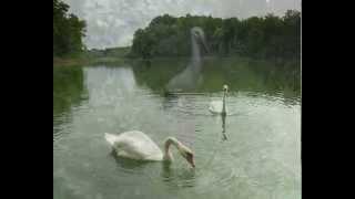 Наше любимое озеро в Колосовке.