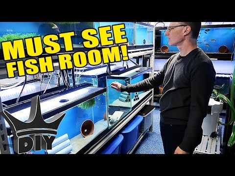 The DOUBLE FISH ROOM Tour!!