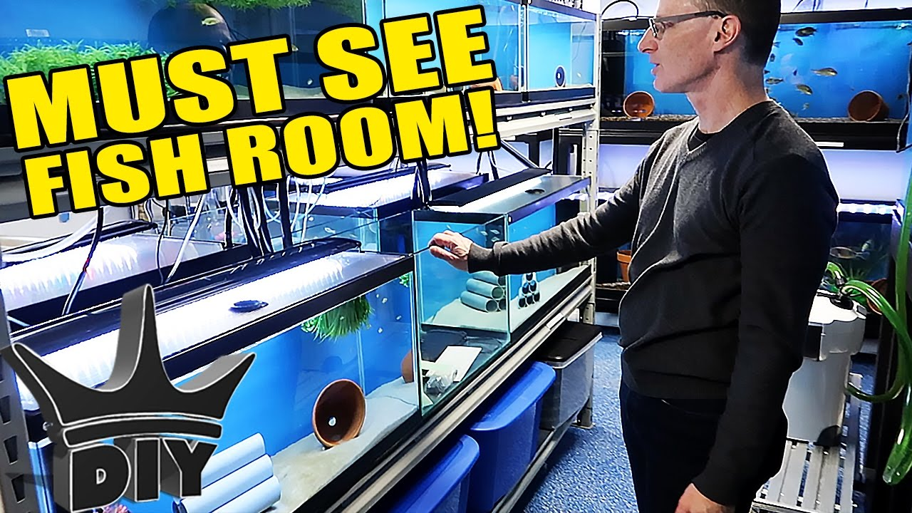 the-double-fish-room-tour